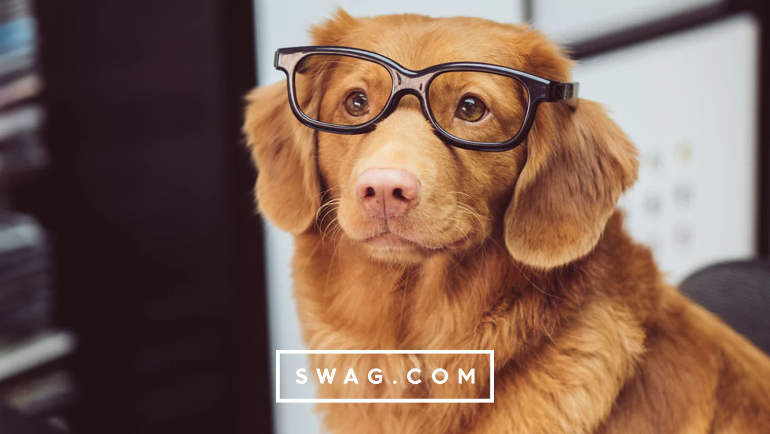 Pet-friendly swag